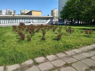 f6b2947a0 Dobrovoľnícke aktivity v mestách - Naše mesto